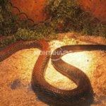 Змии и гущери плъзнаха в Младежкия дом