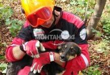 Спасители извадиха куче от необезопасена шахта