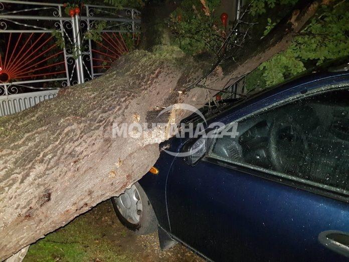 Заради вятър паднаха дървета, а десетки семейства останаха без ток