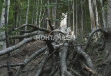 """Дървета са препречили пътя на прохода """"Петрохан"""""""