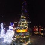 Грейна Коледната елха и в Лом
