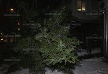 Жълт код за силен вятър! Дървета се прекършиха в Монтана
