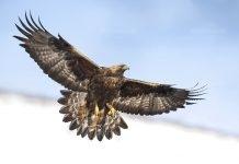 ЧЕЗ Разпределеие стартира програма за проект на птиците
