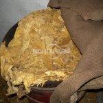 Бали с тютюн къта млад мъж у дома си