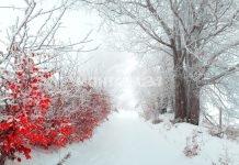 Зимата най-сетне дойде! Къде ще има най-много сняг?