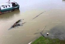 Река Дунав при Лом се покачва застрашително