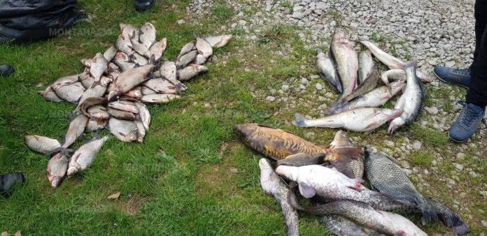 Удар на ИАРА! Голям бракониер от Монтана бе хванат в крачка
