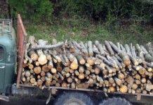 Община Чипровци помага на хората да си набавят дърва за зимата