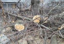 Търсят се опасни, гнили и сухи дървета в Бойчиновци