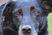 Наказаха ловец с 1000 лева, защото застрелял куче в Славотин