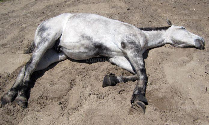 Избити коне в землището на гр. Вършец!