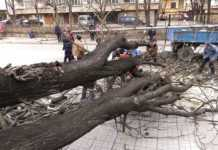 Вятърът изкорени дърво и разпиля ламарини в Монтана