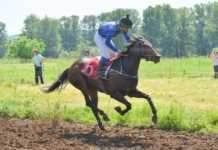 Конни състезания се подготвят в село Крива бара