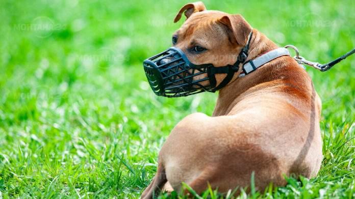 Забраниха разходката на едро куче без повод и намордник