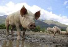 От БАБХ напомнят за изискванията при отглеждането на домашни животни