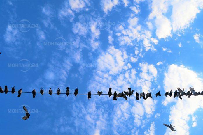 """""""Живот за птиците"""" с номинация за престнижни европейски награди за комуникация"""