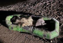 От ИАРА отново задържаха бракониери в язовир Огоста